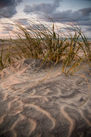 Sea Oats and Sand Dune Textures